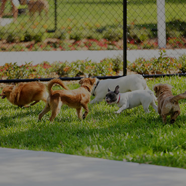 Large Dog Park at Woods Crossing Apartments